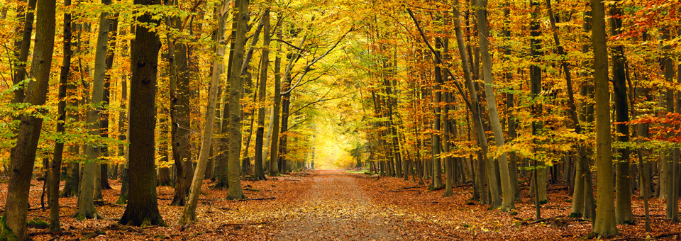 Front-page-pic-autumn-pathway.jpg